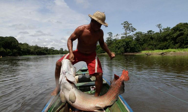 Pirarucu - Foto - Governo do Amazonas