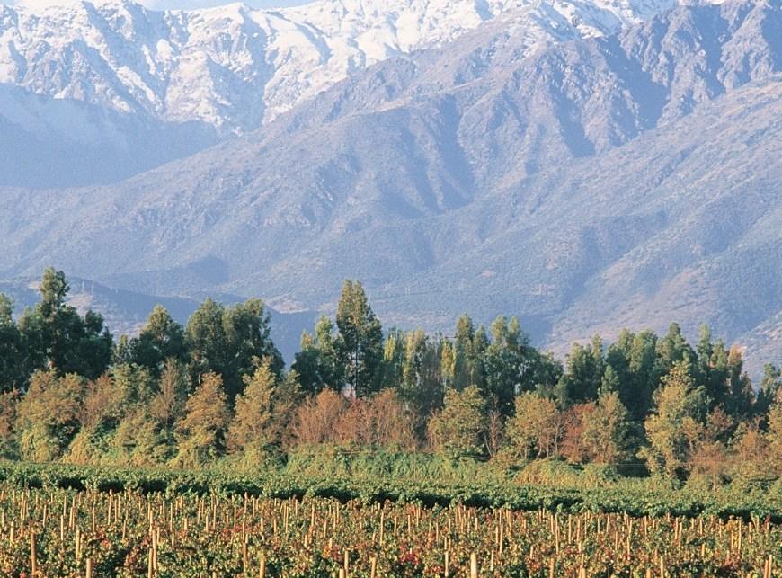 Don Melchor (Chile) reabre vinícola para visitação