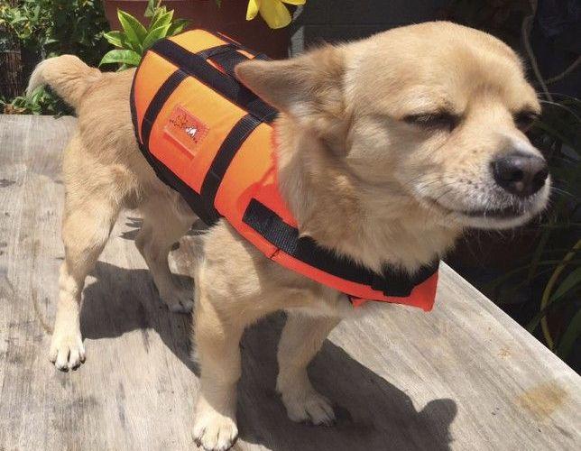 ¿A dónde ir con mi mascota de vacaciones?
