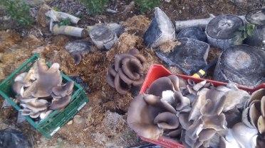 Curso cultivo de setas en Altea