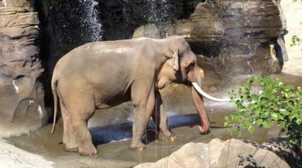 Los Angeles Zoo6