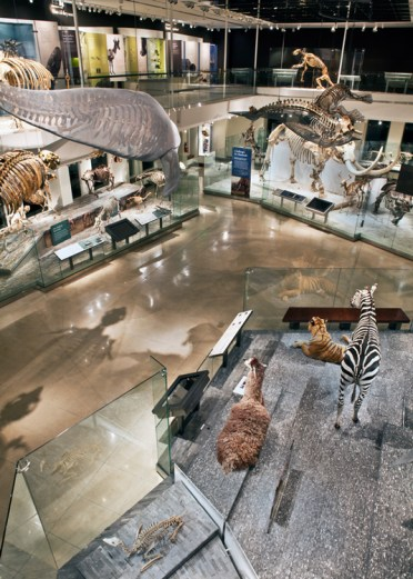 Los-Angeles-Natural-History-Museum-Gallery-view-front-side