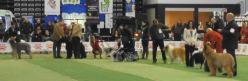 Exposiciones Caninas de Belleza (Nacional e Internacional)