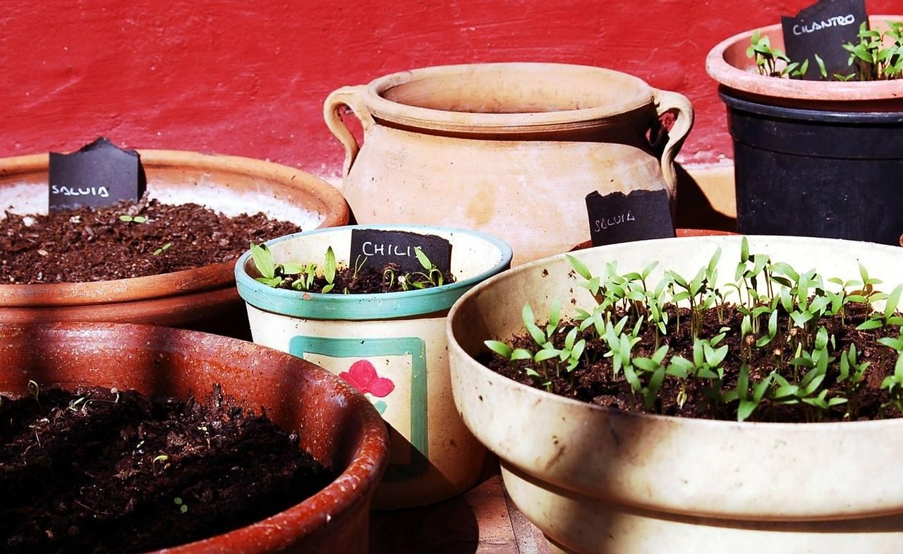 Curso introducción a horta ecolóxica