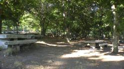I Andaina pola Rexeneración dos Montes de Vigo
