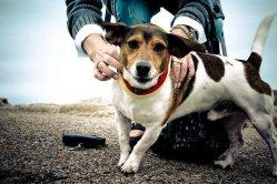 Locales Dog Friendly en Vigo
