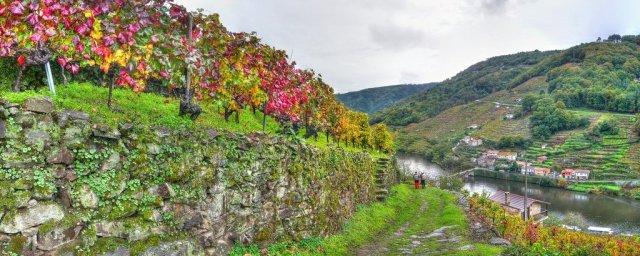 Rutas Gratuitas de los vinos