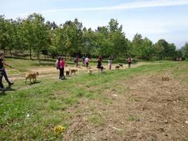 Paseo Biosbardo – Refugio de animales Ponteareas