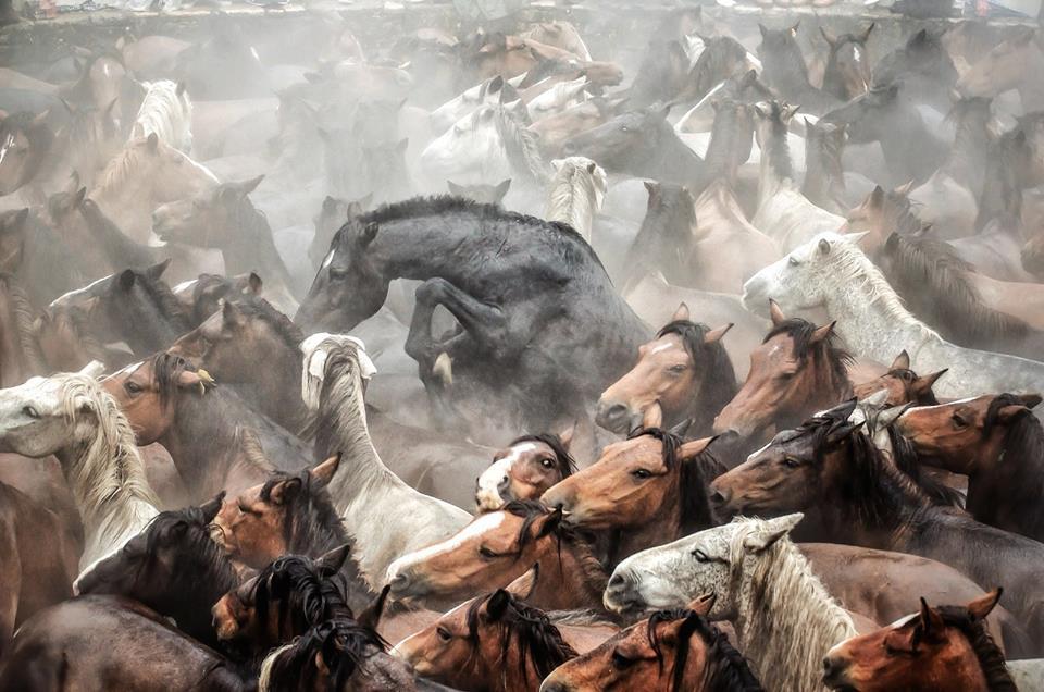 A Rapa das Bestas de Sabudedo 2016