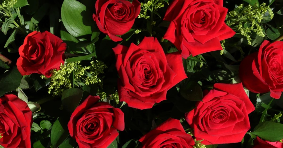 Fiesta de la Rosa 2017 de Mos