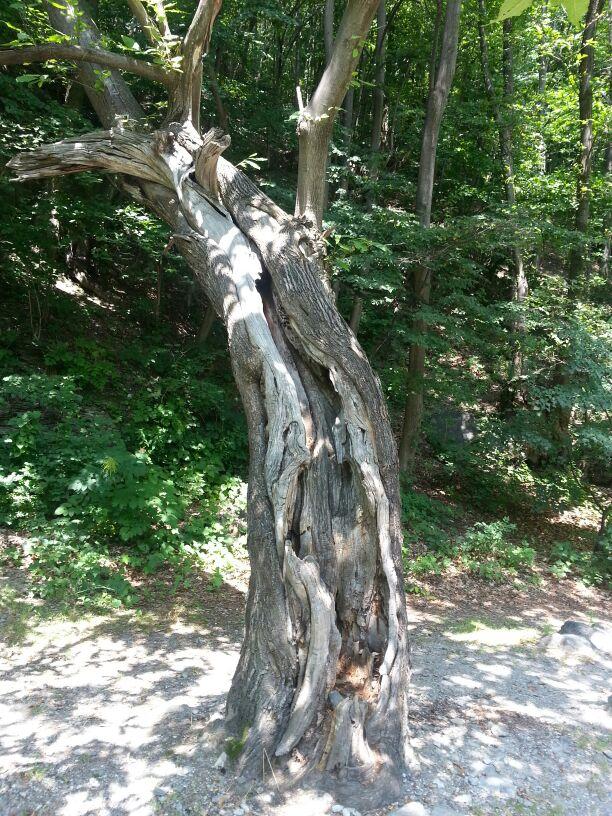 Per fare un albero…