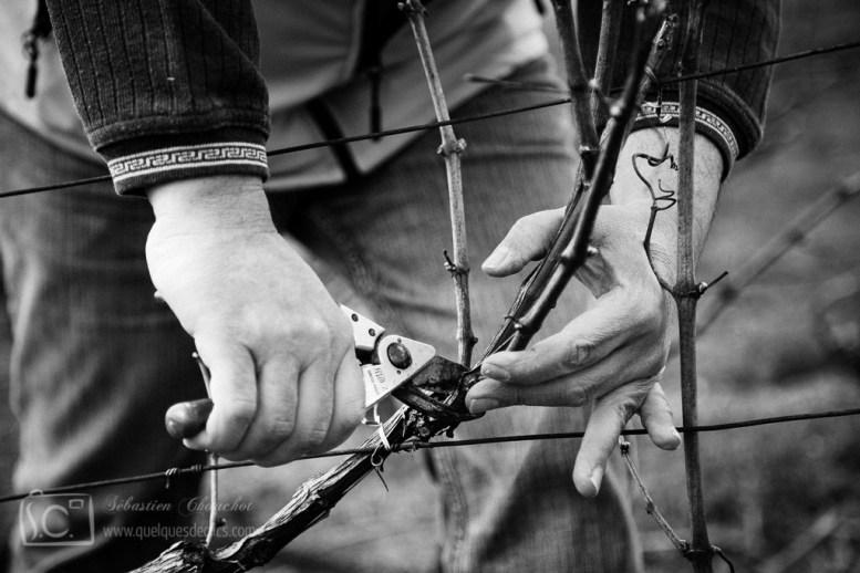 Reportage sur une année, documentaire sur le travail de la vigne