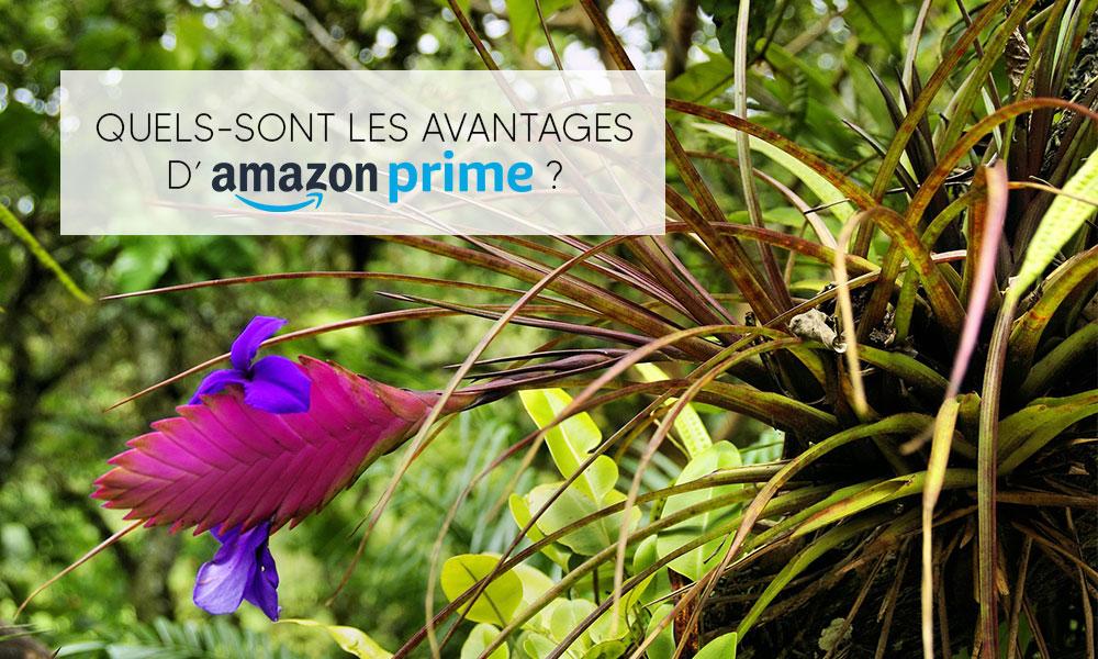 Quels-sont les avantages d'Amazon Prime ?