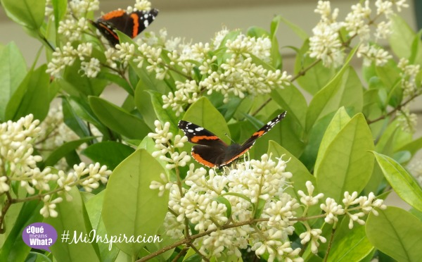 Monarch Butterflies QueMeansWhat