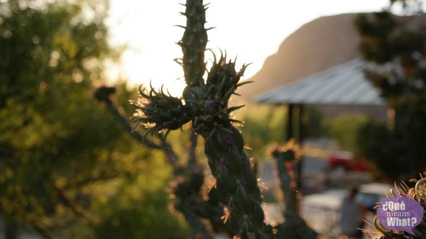 Cactus at Big Bend National Park