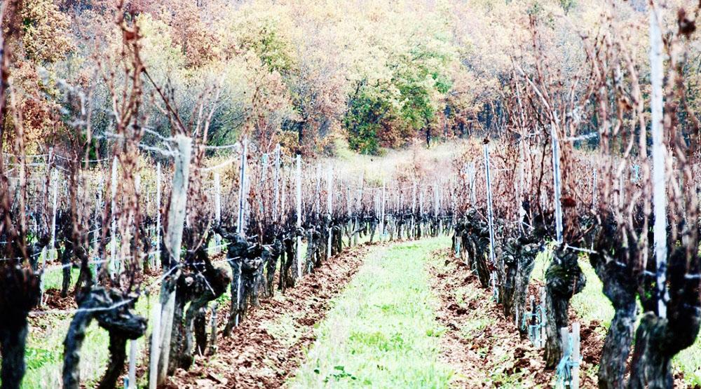 Chahors vineyard Chateau du Cedre