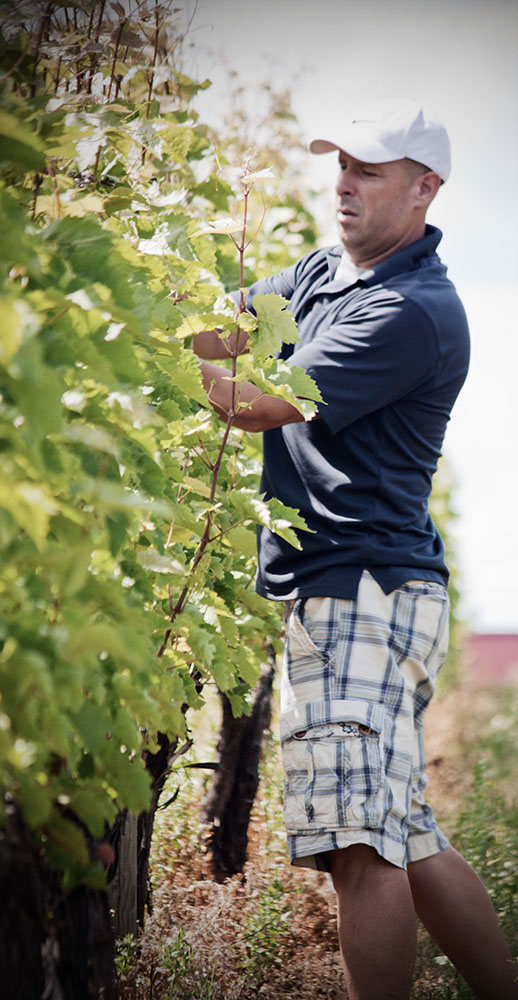 Ian Kaye Avondale Sky Winery