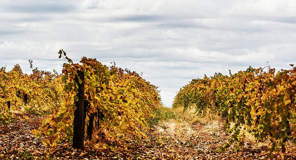 Madrona vineyard el dorado