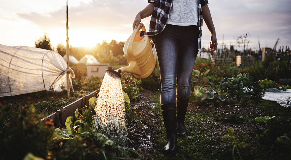 Self care through gardening