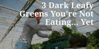 3 Dark Leafy Greens You're Not Eating… Yet