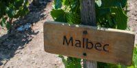 Wine Production - Produção de Vinho