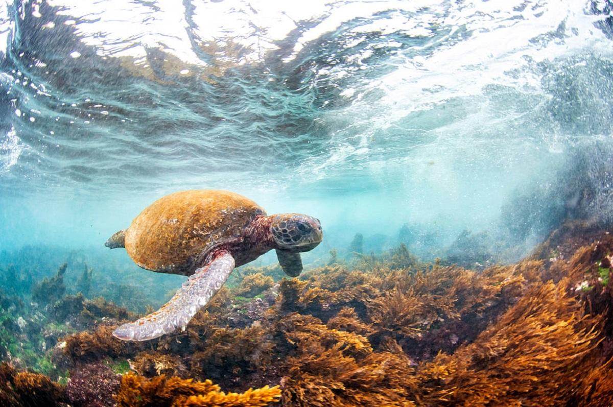 día mundial tortugas