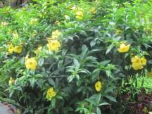 Flora of Vilcabamba