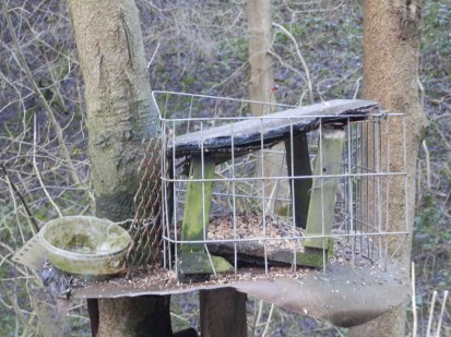 Bird feeders, Cromford
