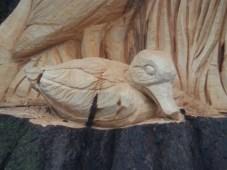 Duck - Arnot Hill Park