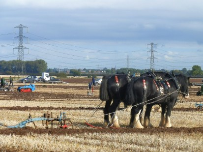 Horse ploughing at Flintham