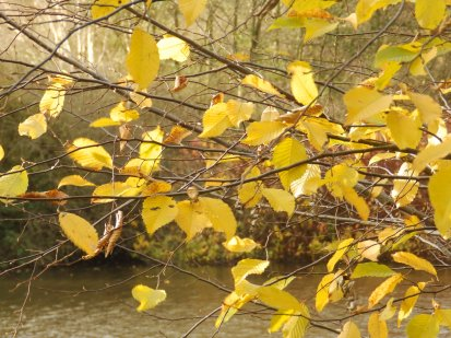Autumn Leaves - Rufford Abbey