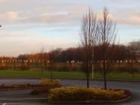 Trees at Wilford, Notts