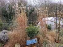 Grasses at Wilford, Notts