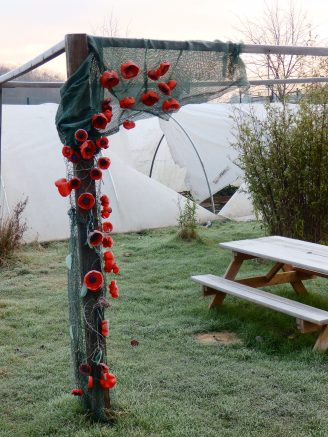 Poppies in the Mencap garden - Wilford