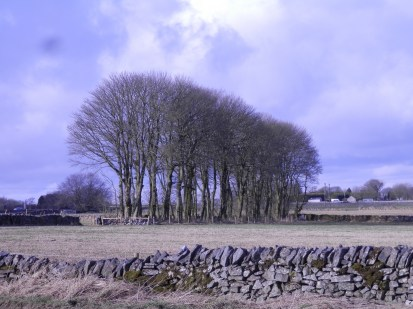 Derbyshire Trees