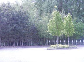 Trees in a car park