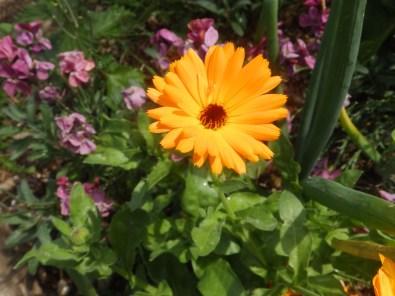 Marigold at Mencap