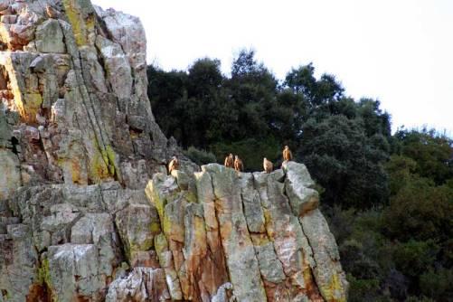 Buitres en el parque natural de Monfragüe