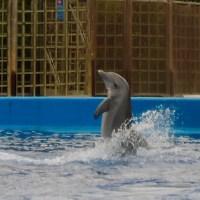 Los delfines fuente de sabiduria