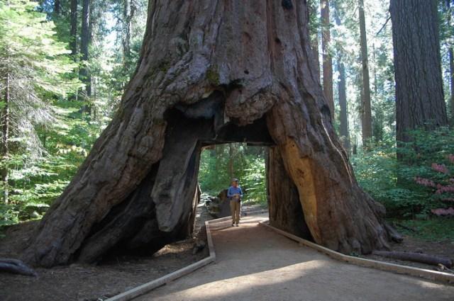 Big-Tree-State-Park
