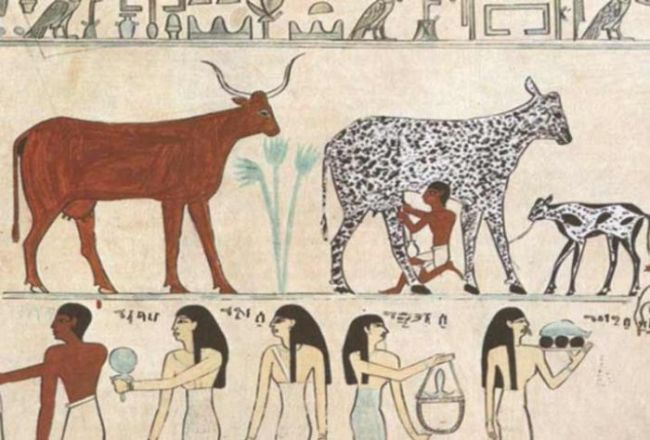 Consumo de leche cultura egipcia