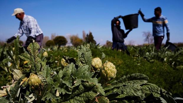 Agricultores y ganaderos sin parar para que nuestros mercados estén abastecidos
