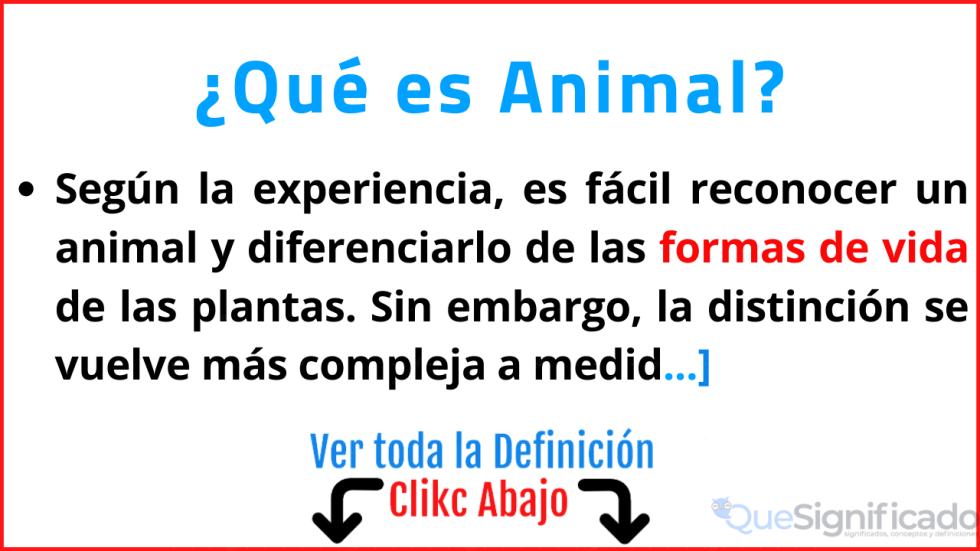 que es animal significado definición características ejemplos