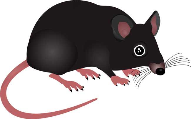 Soñar con ratas y ratones grises