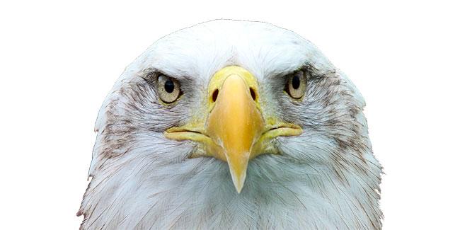 Soñar con águila blanca