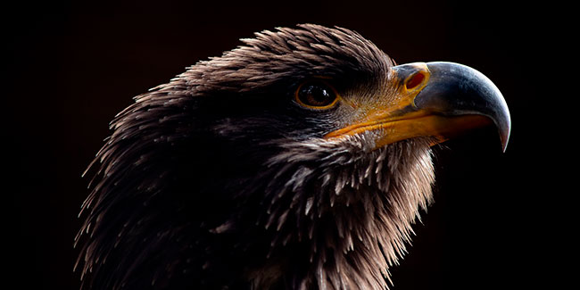Soñar con águila negra