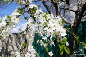 Springtime - Romania.