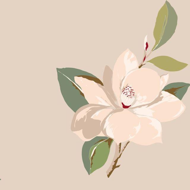cs-magnolia