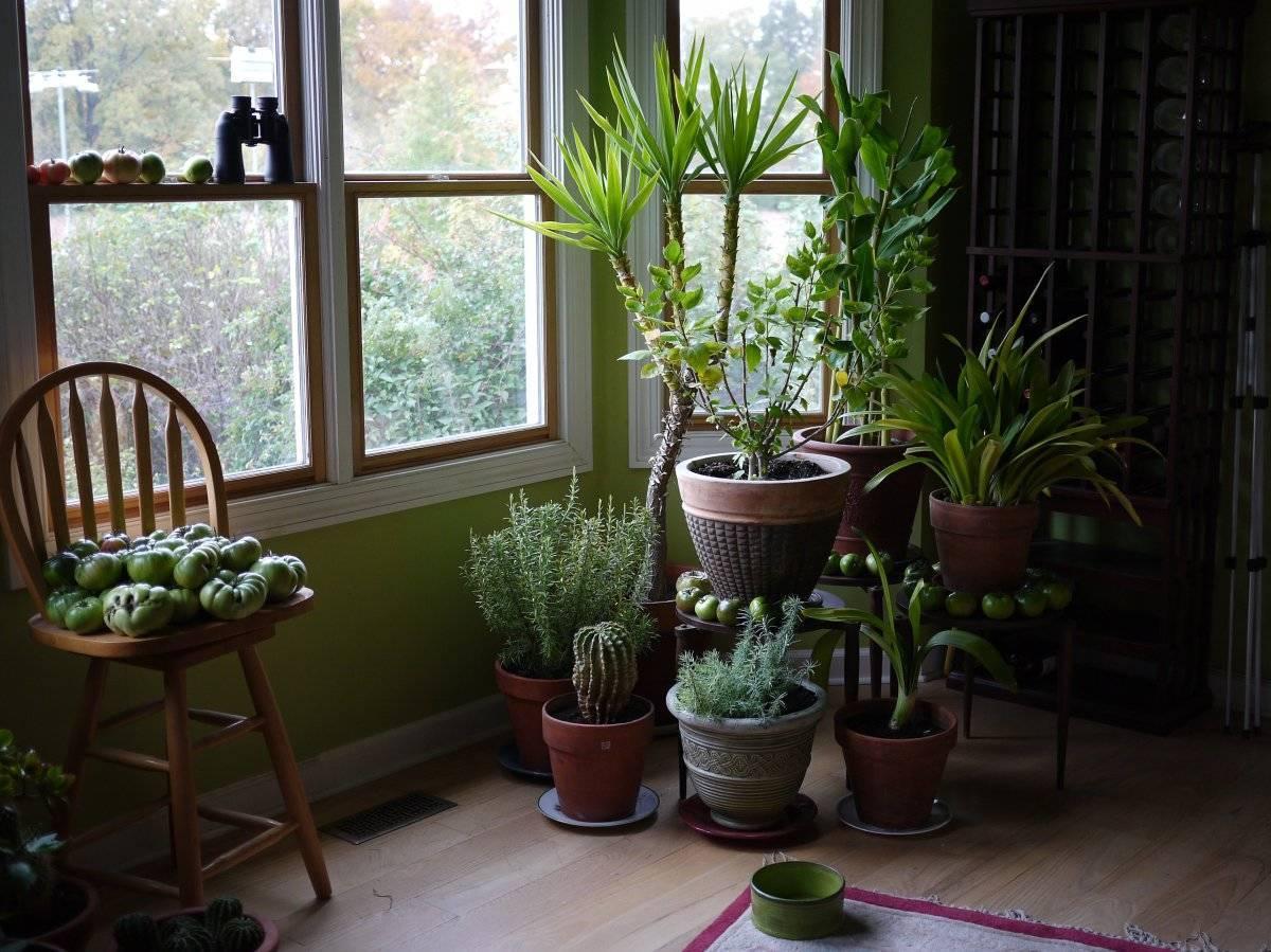 Piante Per Ingresso Buio : Quali piante scegliere per arredare un ingresso