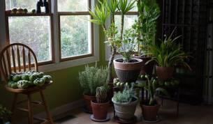 realizzare-un-giardino-in-casa